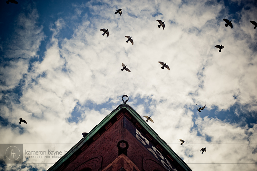 Birds flying in the sky just above the Spaghetti Works building in the Old Market, downtown Omaha, Nebraska