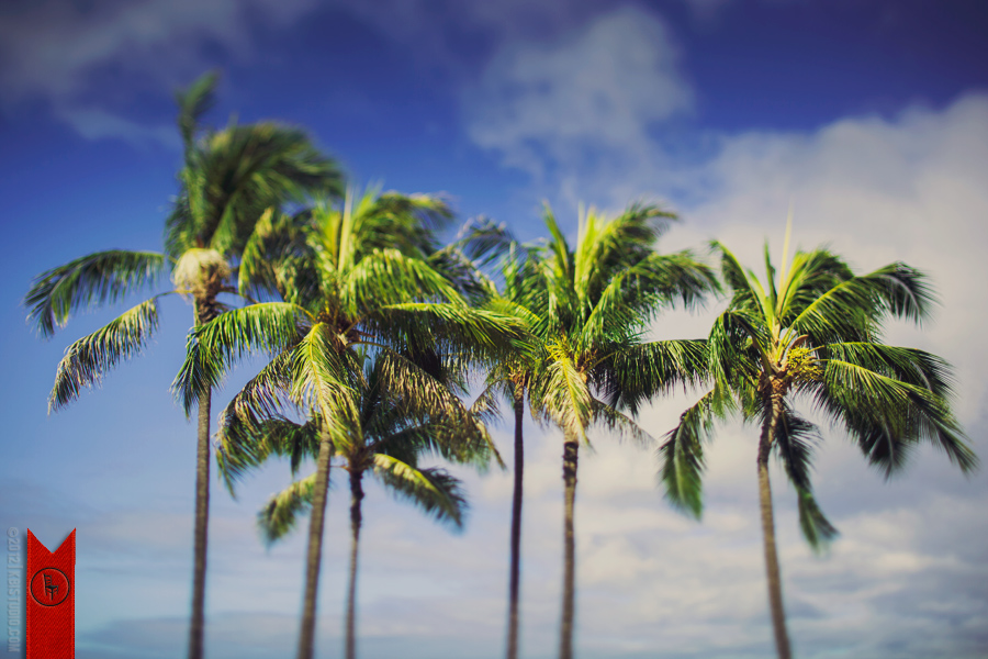 A group of palm trees from Waikiki beach in Hawaii.